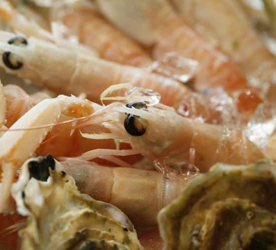 ittiko-gastronomia-pesce-21